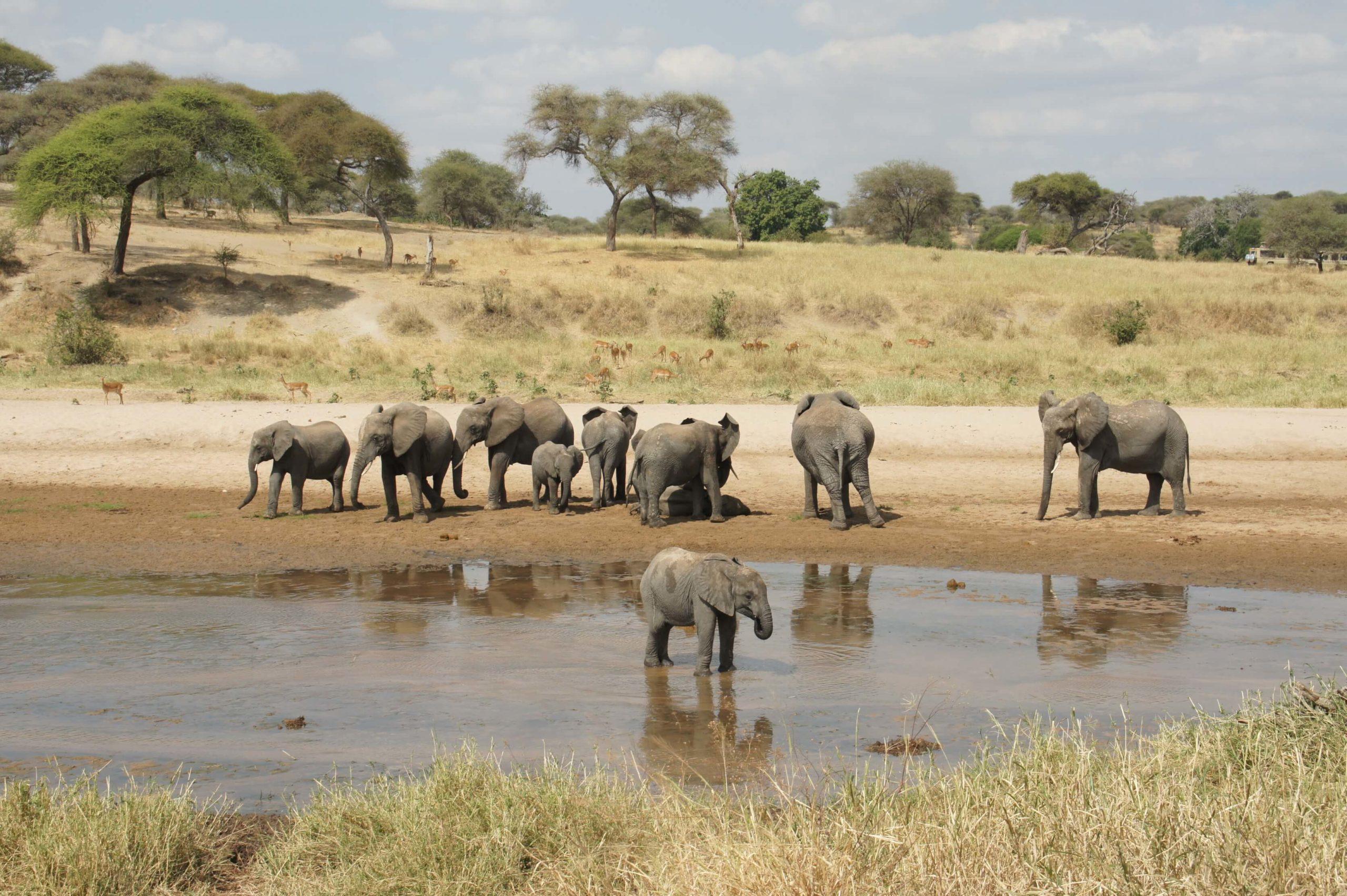 Tarangire and Ngorongoro – Tanzania
